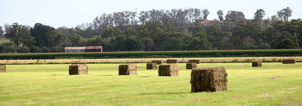Hay bales gippsland