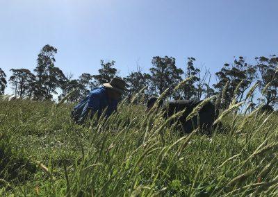 sustainable-farming-gippsland