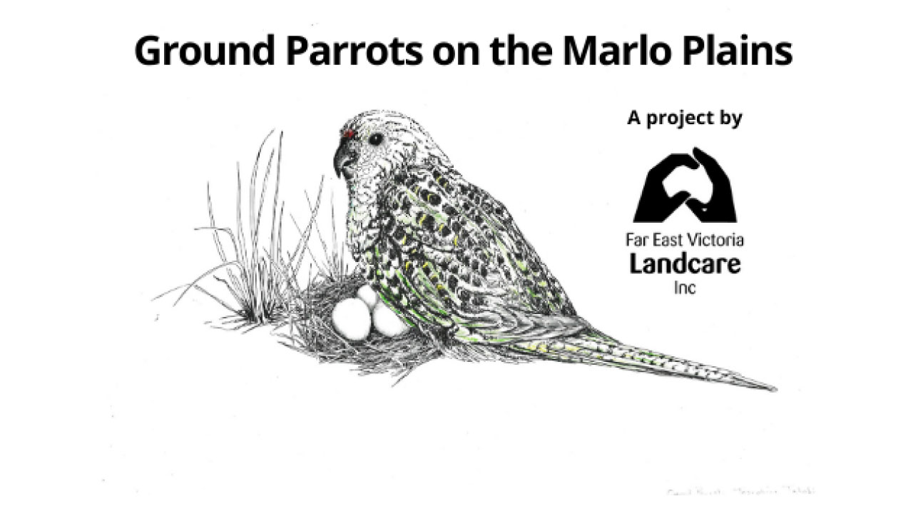 Ground-Parrot-Landcare-project